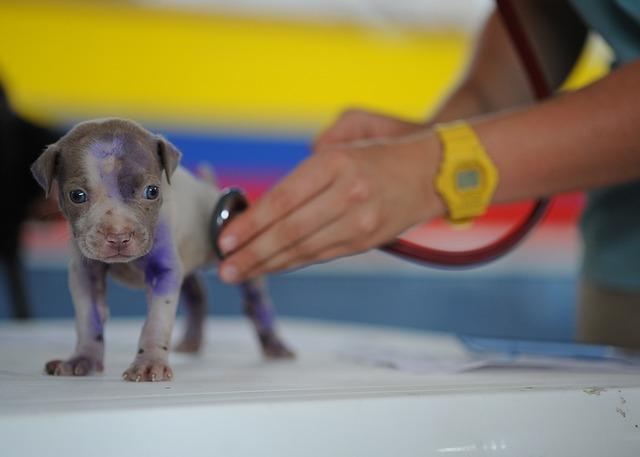 poraněné štěně