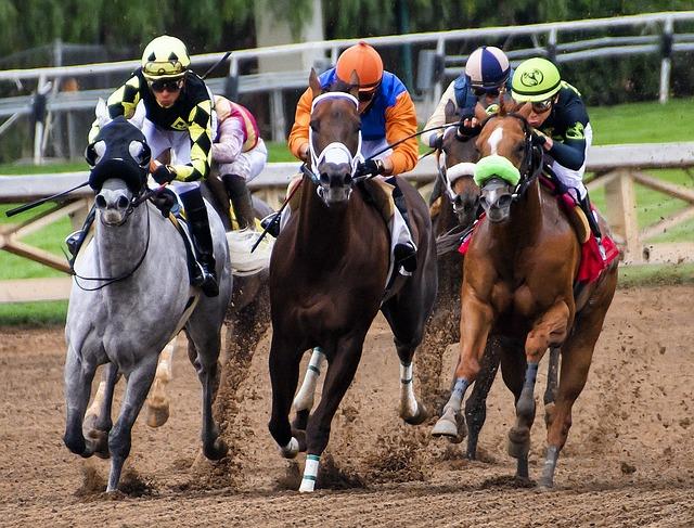 koňské dostihy
